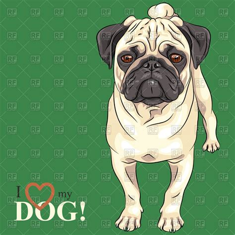 pug vector free pug vector illustration pug royalty free clipart breeds picture