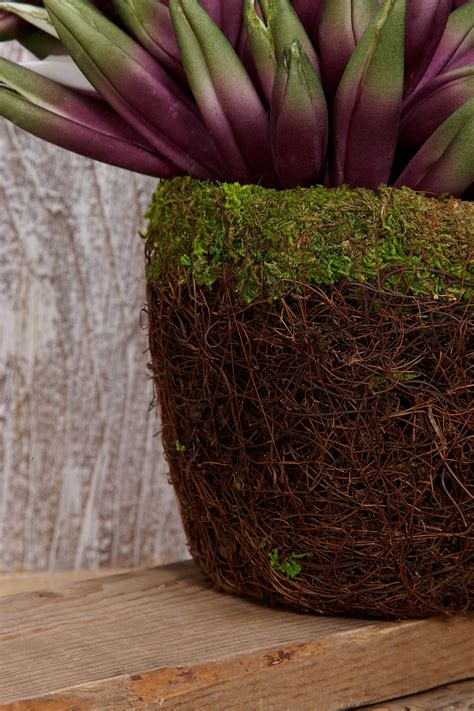 Moss Planters by Moss Planter 6in