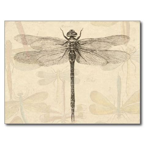 henna tattoo bern 25 best ideas about dragonfly drawing on