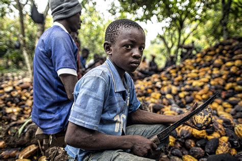 filme schauen the biggest little farm your hershey s chocolate bar was made by child slaves
