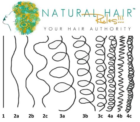 4 natural hair types chart 27 best images about hair type chart on pinterest