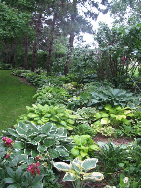 hosta garden ideas 1000 ideas about hosta gardens on shade