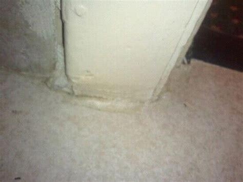 bugs in the bathroom bugs in the bathroom picture of quality inn manchester tripadvisor