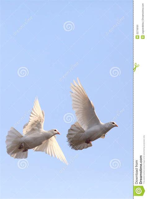 imagenes palomas blancas volando dos palomas blancas que vuelan imagen de archivo imagen