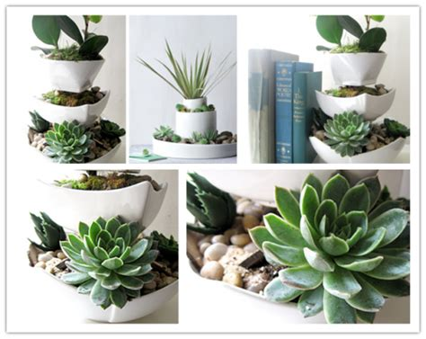 How To Make A Vertical Garden With Succulents How To Make Vertical Succulent Desk Garden How To