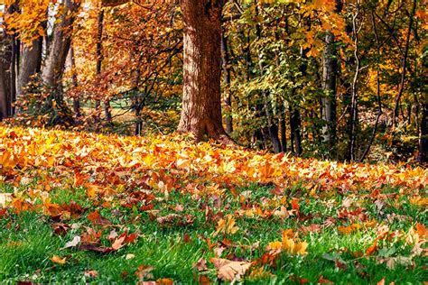 fall garden maintenance fall cleanups sse landscape contractors