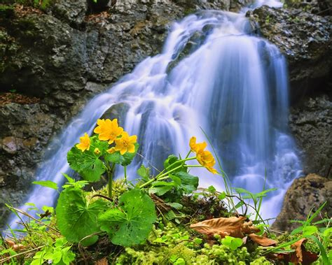 beautiful waterfalls with flowers beautiful flowers and waterfalls