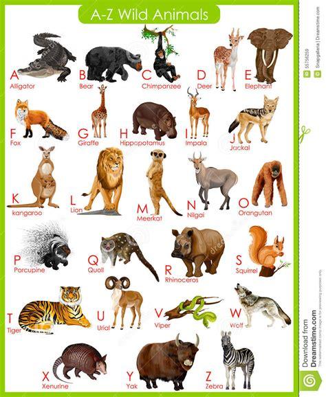 Animaux Z diagramme des animaux sauvages d a 224 de z illustration de