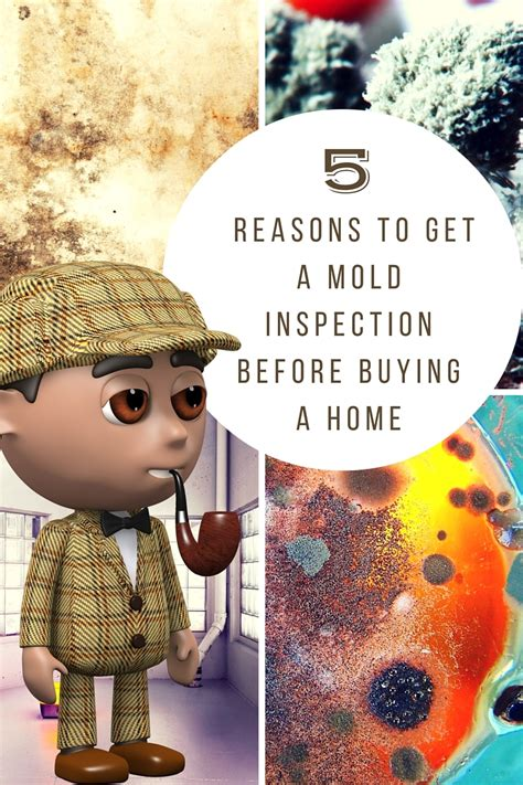 mold inspection before buying a house 5 reasons to get a mold inspection before buying a home