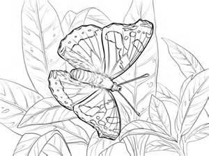 zebra butterfly coloring page zebra longwing butterfly pages coloring pages