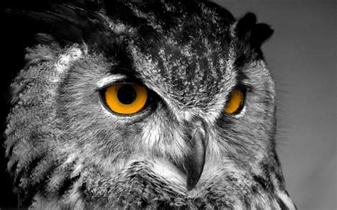 wallpaper for iphone 6 owl 646 eule hd wallpapers hintergr 252 nde wallpaper abyss