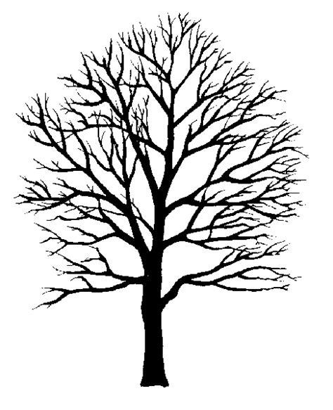 Tree Stencil Printable Google Search Design Pinterest Stenciling Google Search And Google Tree Stencil Template