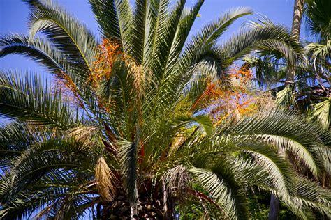 tree in fresno palm tree fresno chaffee zoo