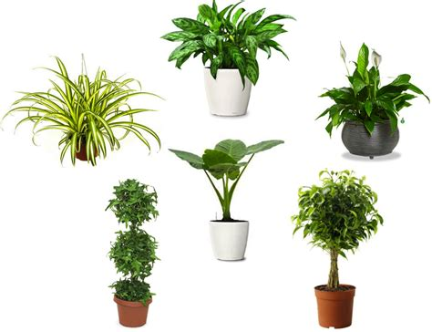 indoor plan air purifying plants indoor plants