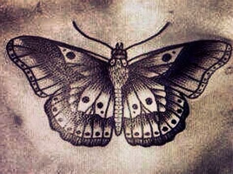 moth tattoo meaning 1000 ideas about moth meaning on moth