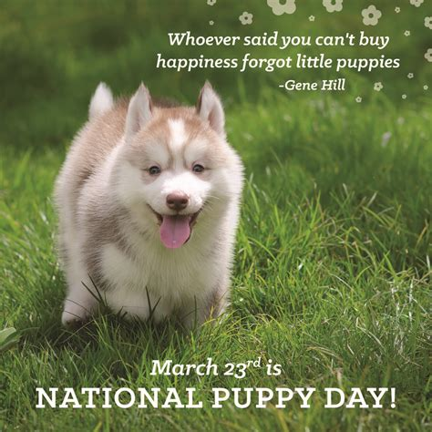 puppy day happy national puppy day best friends pet care the dish