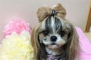 haircut ideas for hair dogs 22 of the fiercest dog hairstyles on the planet