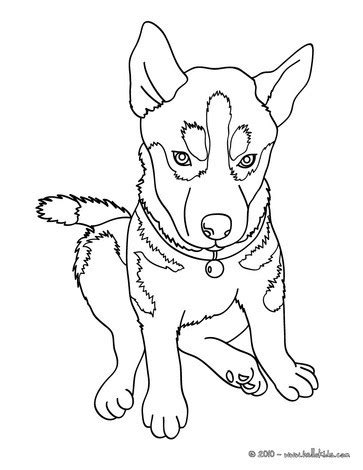 coloring pages of husky puppies husky coloring pages hellokids com