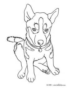 coloring pictures of huskies husky coloring pages hellokids