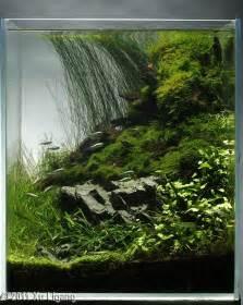 beautiful small vertical tank terrarium fish tank or