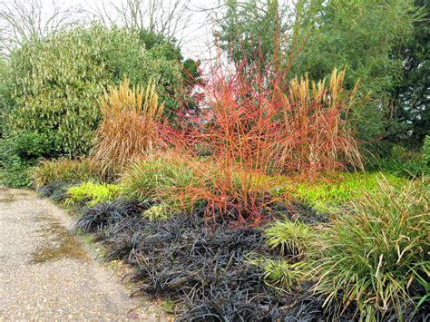 anglesey winter garden gourmet gardening winter gardens