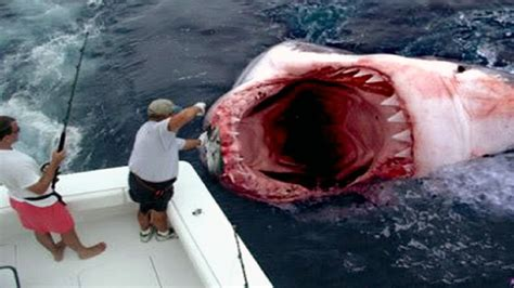 Worst Recorded The 25 Worst Shark Attacks Recorded Historylocker