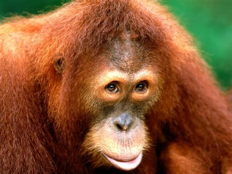 cute monkey pictures, cute baby monkeys   tedlillyfanclub