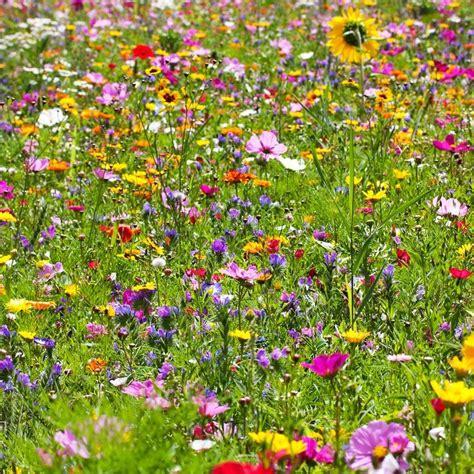 Steine Statt Rasen by Die Besten 25 Garten Anlegen Ideen Auf