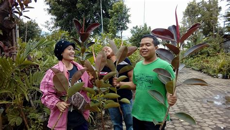 mengenal tanaman obat odesa indonesia