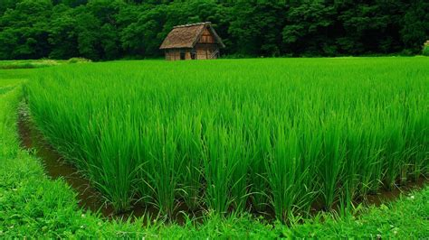 wallpaper green field free download 44 hd green wallpapers for windows and mac