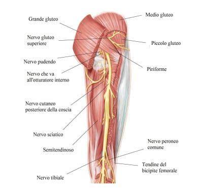 dolore adduttore interno coscia contrattura muscolare a schien polpaccio o coscia