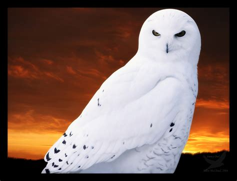 Snow Owl Papercraft By Elfbiter On Deviantart - snowy owl by darksilverflame on deviantart