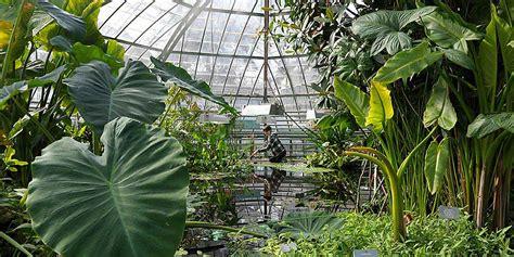 botanischer garten basel botanischer garten universit 228 t basel