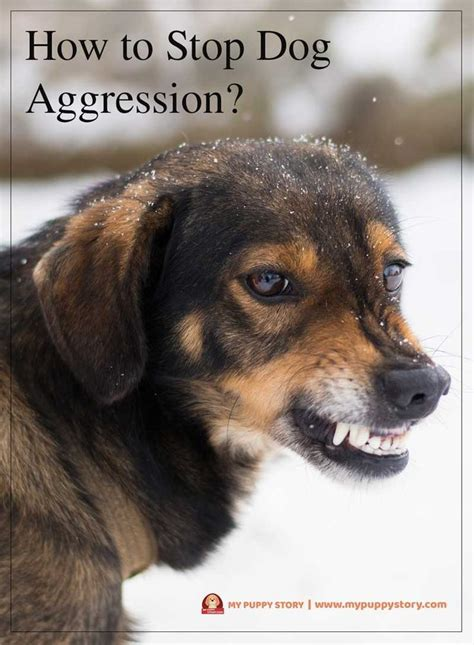 how to aggression out of dogs 25 best ideas about puppy toilet on behavior puppy care and