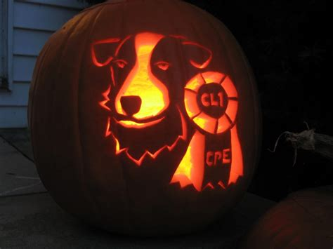 pumpkin and dogs pumpkins for pups is pumpkin for dogs rover