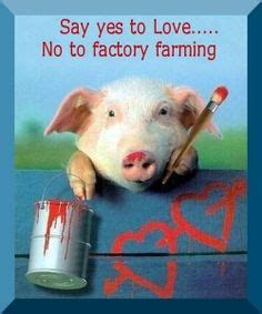 Miller Says There Was No On The Factory Set by 1000 Images About Factory Farming On Factory