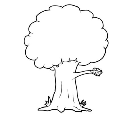 blue ash tree coloring page free printable coloring pages printable tree coloring pages tree coloring pages