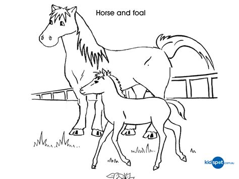 animal coloring pages pony baby animals coloring pages free colouring pages coloring