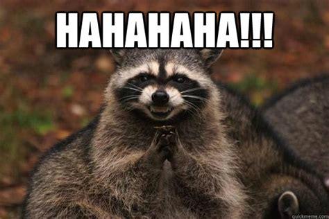 Meme Generator Raccoon - image gallery hahahaha evil