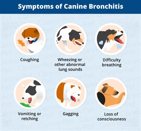 bronchitis in dogs bronchitis in dogs causes signs treatments canna pet