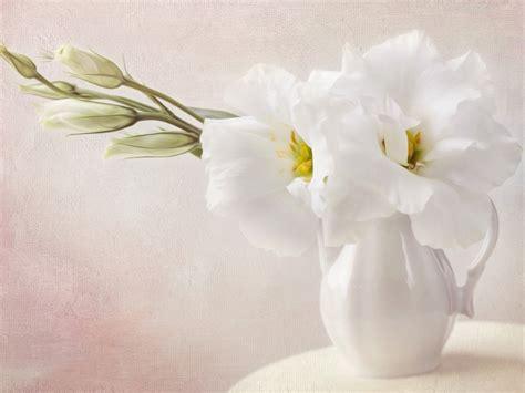 wallpaper flower white white flowers wallpaper 1024x768 4797 wallpaper cool