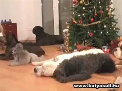 28 best dogs decorating christmas tree christmas