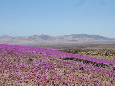 imagenes de flores de la zona norte zona norte de chile juntos aprendiendo sobre chile