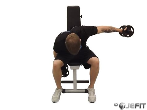 dumbbell bench fly dumbbell seated alternate bent over reverse fly exercise