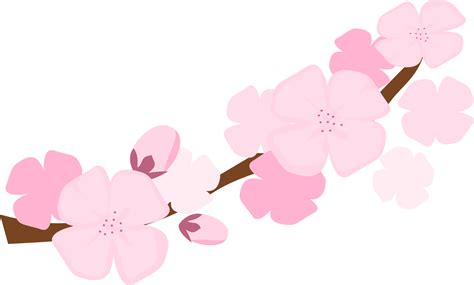 cherry blossom clip cherry blossoms clipart cliparts co