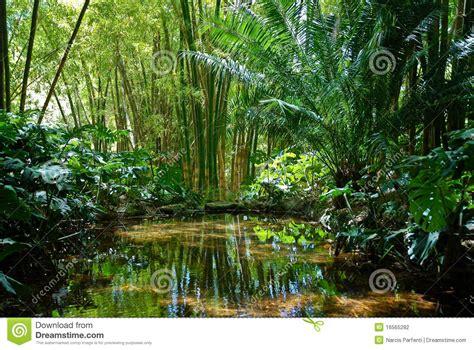 la selva de sara paisaje 2 de la selva fotograf 237 a de archivo imagen 16565282