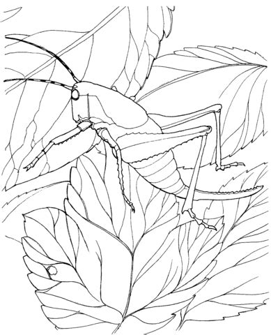 cicada coloring page coloring pages