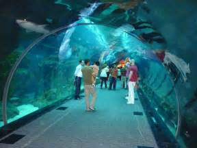 Aquarium Zoo Images Pk Dubai Aquarium