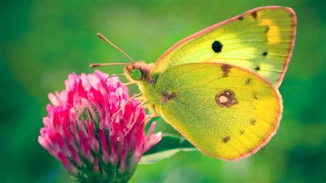 butterfly desktop wallpapers allfreshwallpaper butterfly desktop wallpapers allfreshwallpaper