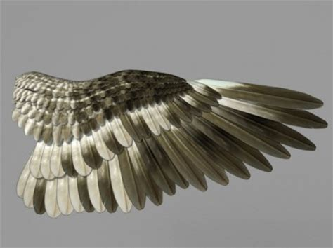bird wing development for computer graphics ncca
